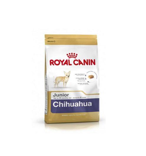 Chihuahua Junior 1.5kg, Paws & Claws Pets